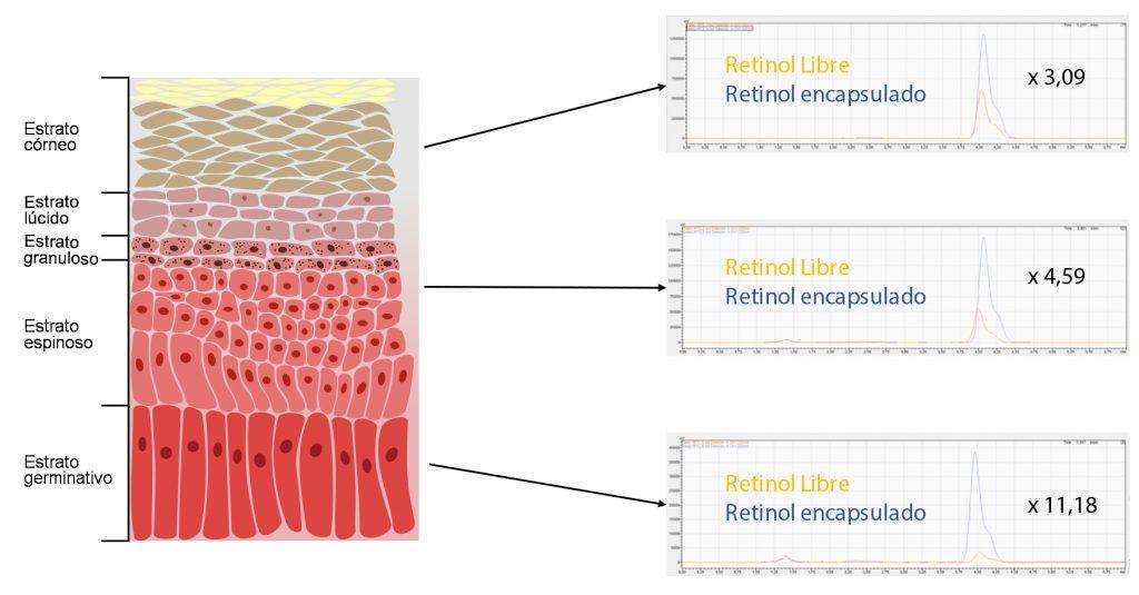 Gráficas comparativas del aumento de la cantidad de retinol en las distintas capas de la piel